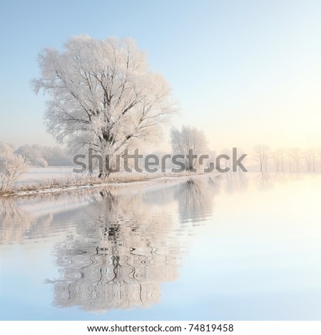 Frosty winter tree illuminated by the rising sun. - stock photo