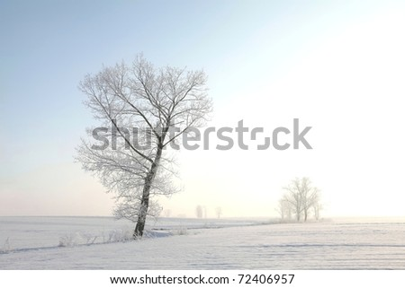 Frosty winter tree in the field on a cloudless morning. - stock photo
