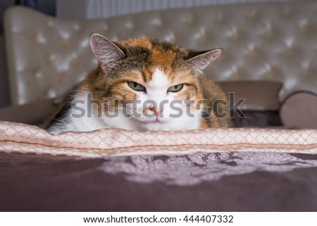 frown cat - stock photo