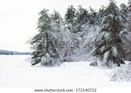 Frozen and snow covered trees on the side of a frozen lake - stock photo