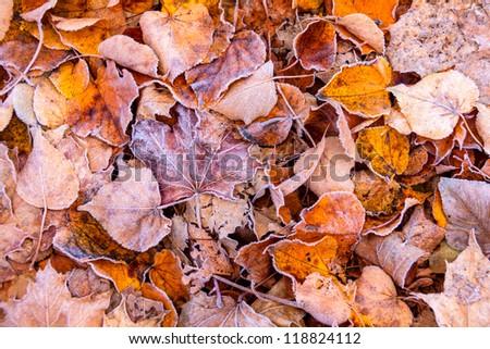 Frozen autumn leaves - stock photo