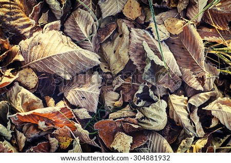 Frozen autumn leaves, natural vintage winter  background, macro image - stock photo