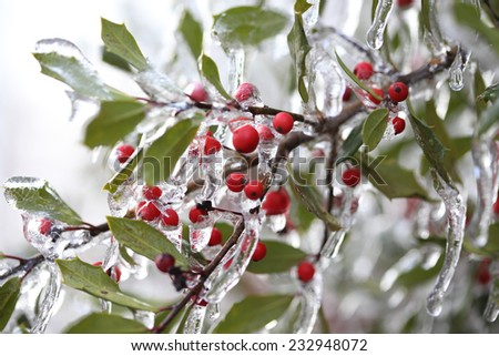 Frozen berries during freezing rain - stock photo