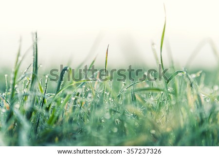 Frozen dew on grass in a winter morning  - stock photo