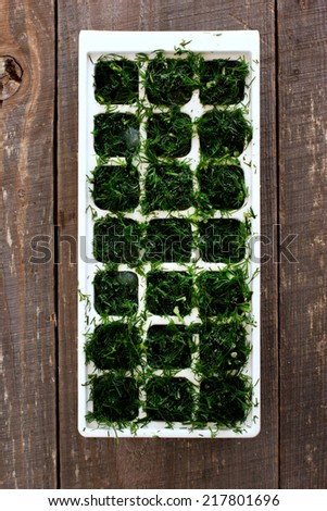 Frozen dill cubes in molds for ice cubes - stock photo