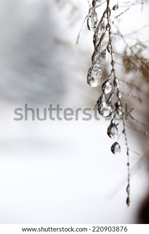 Frozen droplets on a twig during cold winter months - stock photo