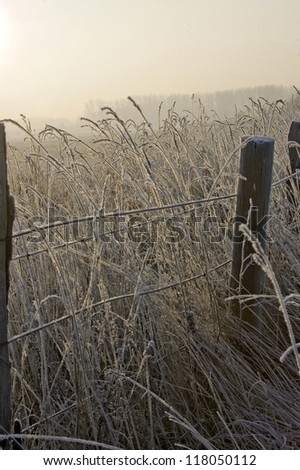Frozen electrified fence on the fringe of a willow in the winter sun - stock photo