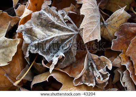Frozen Fall - stock photo