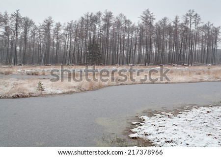 frozen forest swamp in gloomy winter morning - stock photo