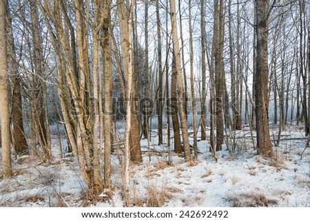Frozen forest with snow