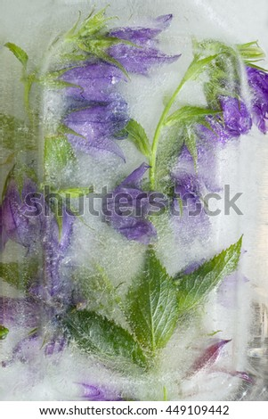 Frozen fresh beautiful flower of jessamine, campanula and air bubbles in the ice cube - stock photo