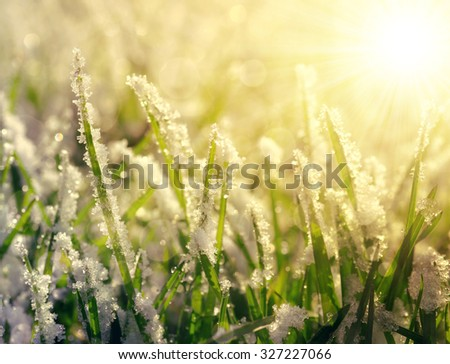 Frozen grass at sunrise close up. Nature background. - stock photo