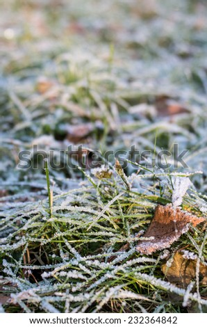 Frozen grass with autumn leaves, covered by hoarfrost - abstract nature background  - stock photo