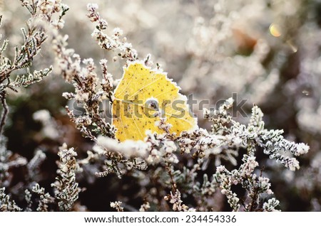 Frozen heather flower and leaf, floral vintage winter  background, macro image - stock photo