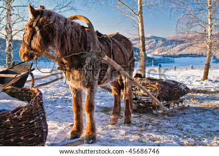 Frozen horse with open sleigh - stock photo
