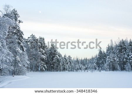 frozen lake in a winter forest - stock photo