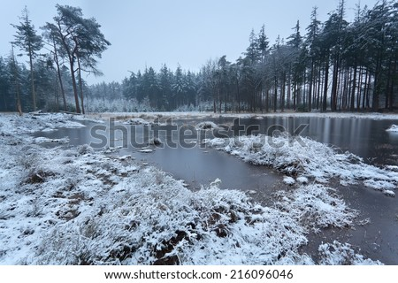 frozen lake in winter coniferous forest - stock photo