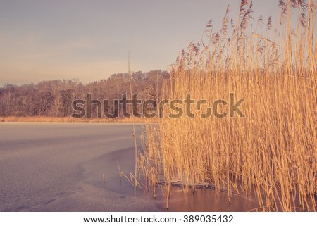 Frozen lake with reeds in a winter scenery - stock photo