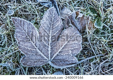 frozen leaf - stock photo