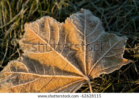 frozen leaf in the early autumn morning