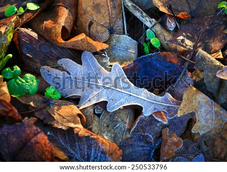 frozen leafage - nice abstract natural background - stock photo