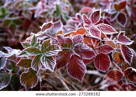 Frozen leafs - close up - stock photo