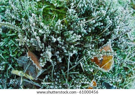 frozen moss - stock photo