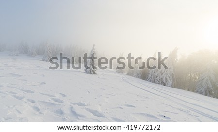 Frozen pine trees on the foggy winter alpine hillside slopes in beautiful sunlight