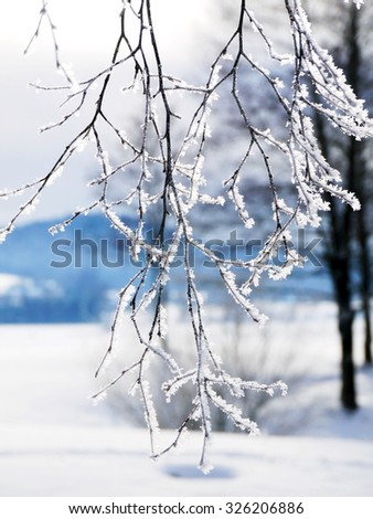 Frozen plants in a snowy winter time - stock photo
