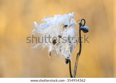 frozen plants in early morning close up in winter - stock photo