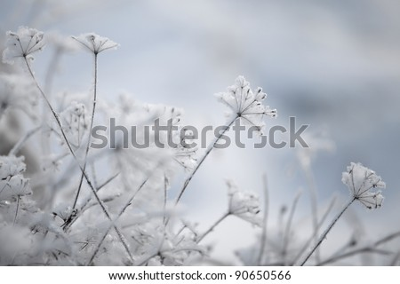 Frozen plants, winter background - stock photo