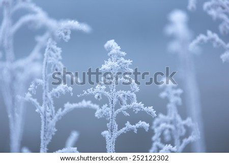 Frozen plants with ice in winter with blue color and a blurred background