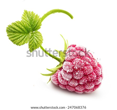 Frozen raspberry branch isolated on white background - stock photo