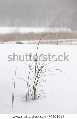 Frozen rose tree branches - stock photo