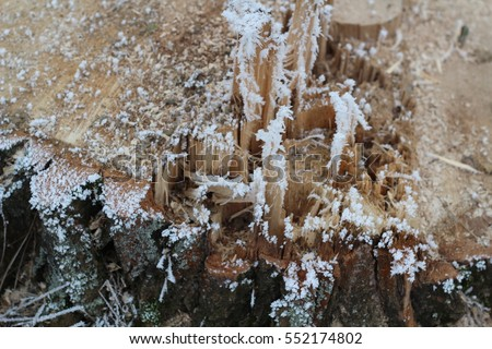 Frozen stump covered by snow and ice in winter.  Detail of winter bushes in South Moravia, Czech Republic.