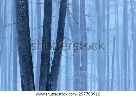 Frozen tree and winter forest background - stock photo