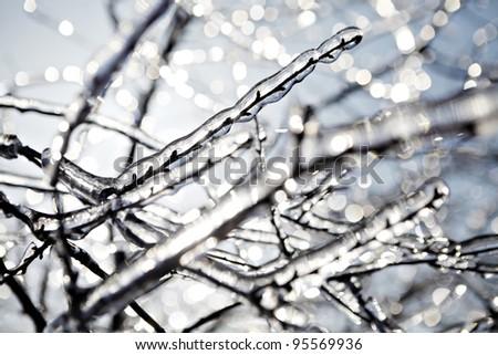 Frozen tree branch in winter - stock photo