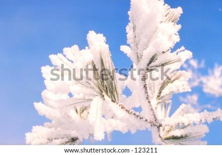 Frozen tree Gatineau Canada - stock photo