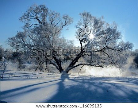 Frozen tree on a riverbank at winter
