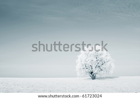 Frozen tree on winter field - stock photo