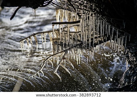 Frozen tree with icicles. Danish winter landscape closeup. - stock photo