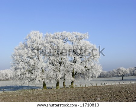 Frozen trees - stock photo