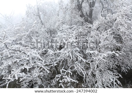 Frozen trees after snow storm on hill - stock photo