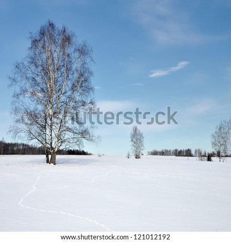 Frozen trees in field with steproad and blue sky with clouds - stock photo