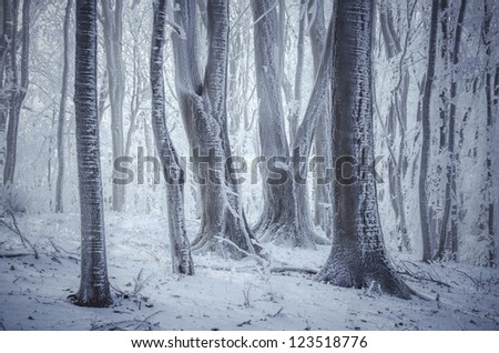 frozen trees in forest win winter - stock photo