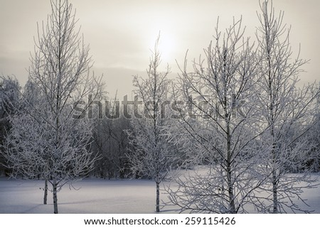 Frozen trees in forest winter - stock photo