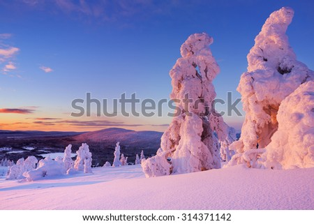 Frozen trees on top of the Levi Fell in Finnish Lapland. Photographed at sunset. - stock photo