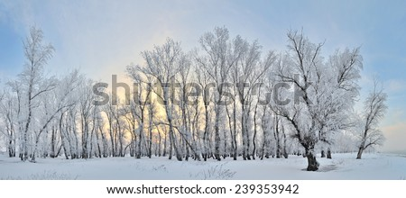 Frozen trees on winter landscape and blue sky - stock photo