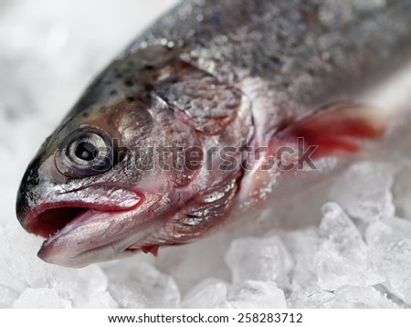 frozen trout stored in ice - stock photo