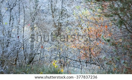Frozen winter landscape. Trees with the hoar-frost - stock photo